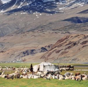 The nomads of the Himalaya